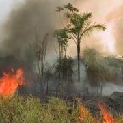 Größte Zahl an Waldbränden seit 13 Jahren