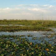 Brennende Feuchtgebiete: Bevölkerung fordert staatliches Eingreifen