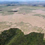 Entwaldung im Amazonasgebiet: drei Fußballfelder pro Minute