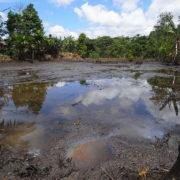 Wir dokumentieren: Umweltorganisationen verklagen Regierung