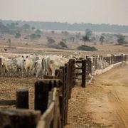 Anstieg der Pantanal-Brände, Anstieg der Rindfleischexporte