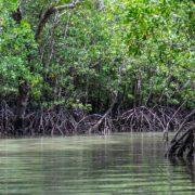 Jährlich werden 10.000 Hektar Mangrovenwälder abgeholzt