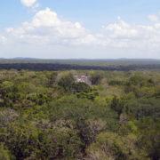 Massive Umweltschäden durch Tren Maya befürchtet