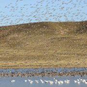 Greenpeace warnt vor Verschmutzung und Verlust von Feuchtbiotopen
