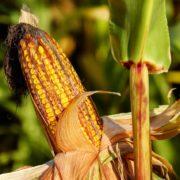 Positive Signale in der Agrarpolitik?