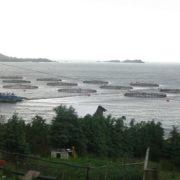 Provinz Tierra del Fuego verbietet Lachsfarmen