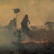 Hohe Waldbrandgefahr in mehreren Bundesstaaten